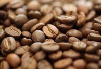Mark 9.1 Pitbull Coffee เม็ดสีน้ำตาลทอง ขนาดเม็ดสวยงาม